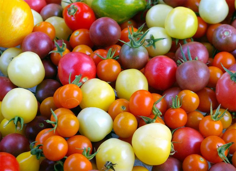 Les 10 principaux bienfaits des tomates pour la santé